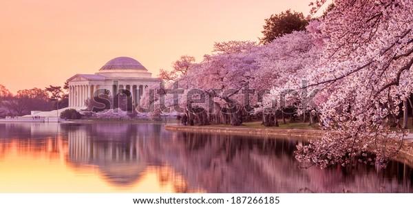 the Jefferson Memorial during the Cherry Blossom Festival. Washington, DC