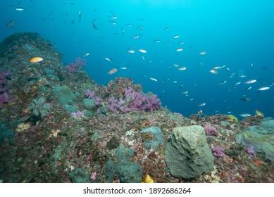 Le corail et le poisson doux de Jeju