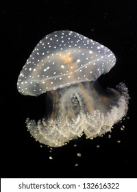 Jelly fish color at the black background