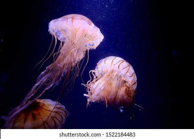 Jellyfish floating in the sea. I feel healing just by looking.