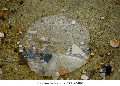 Jellyfish on Sand in the Outer Banks of North Carolina.