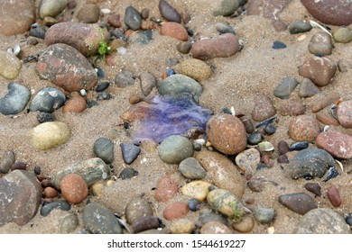 jellyfish on a sandy beach within the pebbles