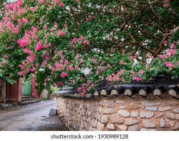 Jeongeup-si, Jeollabuk-do, South Korea - August 1, 2020: Pink flowers of Lagerstroemia india with roof tile and stone wall at Seohyunsa Temple Site