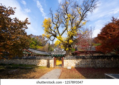 JEONJU, KOREA - NOV, 15, 2018: Beautiful autumn in Jeonju Confucian School in Jeonju Hanok Village