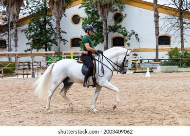 Jerez de la Frontera, Cadiz, Spain - June 17, 2021: Rider performing training exercises with a purebred Andalusian white horse