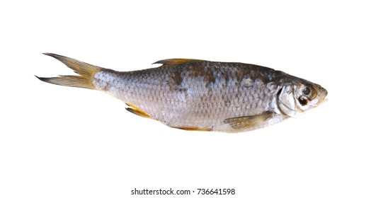 jerky fish isolated on white background closeup