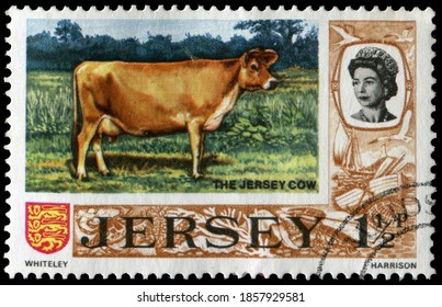 Jersey, UK - 1970-75: Jersey Cow, a British breed of small dairy cattle from Jersey, in the British Channel Islands. Stamp issued in 1970-75 in Jersey.