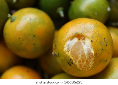 Jeruk kasturi ( in Indonesian ) or calamansi close up photo