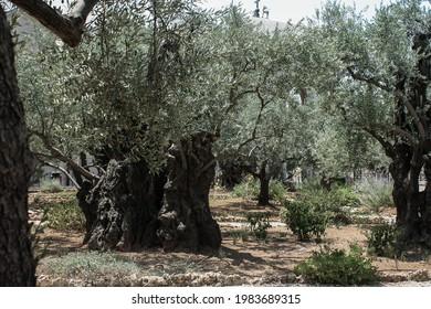 Jerusalem, Israel; 07.21.2017: Mount of Olives as in 2017