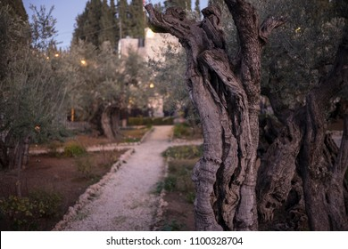 Jerusalem, Israel - December 19 2017: The night view in Gethsemane, where Jesus got caught when he was praying at night.
