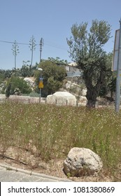 Jerusalem, Israel, June 16, 2010: Outskirts, the city street. Round a large stone, field flowers and a car in a case. Day of Jerusalem