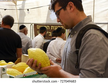 Jerusalem, Israel - October 1, 2017 A potential buyer inspects an etrog, or citron, at the Four Species Market near Machane Yehuda Market, in preparation for the Sukkot festival.