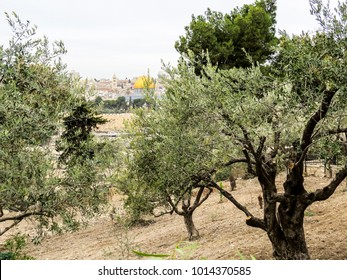 Jerusalem, Israel - view of The Old City of Jerusalem from the Mount of Olives. closeup of the The Dome of the Rock