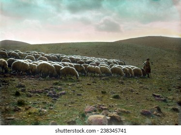 Jerusalem, Shepherd going before his flock, hand-colored transparency, ca 1918