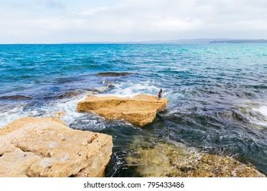 Jervis Bay Cormorant