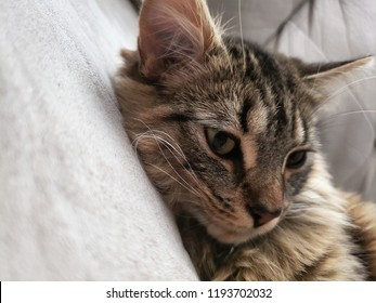 Jeune chat tabby qui dort. Young tabby cat sleeping.