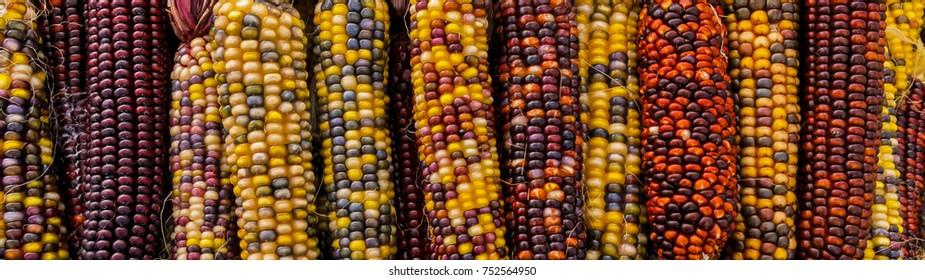 Jewel-Like Kernels of Indian Corns