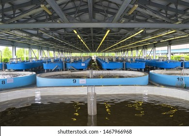 Jewish Autonomous region, Russia - July 26, 2019: Sturgeon fish hatchery in Vladimirovka. Jewish Autonomous region, far East, Russia.