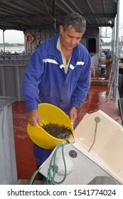 Jewish Autonomous region, Russia - July 26, 2019: Fish hatchery for artificial breeding of sturgeon in Vladimirovka. Fish farm worker releasing Amur sturgeon fingerlings into the Amur river.