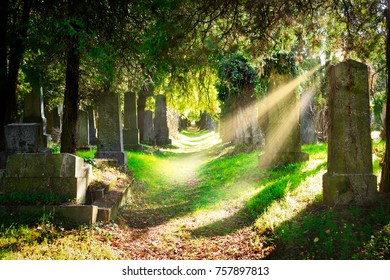Jewish cemetery with sunbeams, landscape with graves in autumn