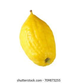Jewish festival of Sukkot. Etrog (Lemon)Traditional symbol (One of The four species). Isolated on white.