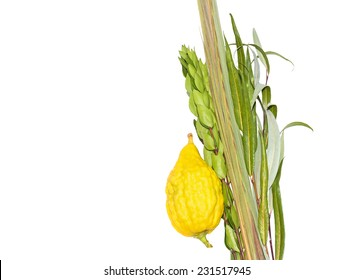 Jewish festival Sukkot four species lulav and esrog isolated on white background with copyspace. Palm branch, willow and myrtle leaves, bright yellow etrog. Room for text, copy space.