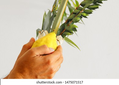 Jewish festival of Sukkot. Jewish man holding traditional symbols (The four species): Etrog, lulav, hadas, arava