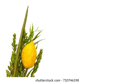 Jewish festival of Sukkot. Traditional symbols (The four species): Etrog, lulav, hadas, arava. isolated on white.