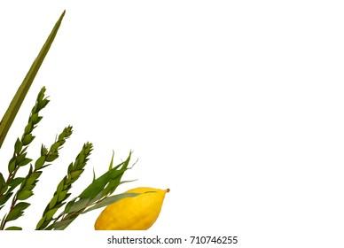 Jewish festival of Sukkot. Traditional symbols (The four species): Etrog, lulav, hadas, arava. isolated on white.