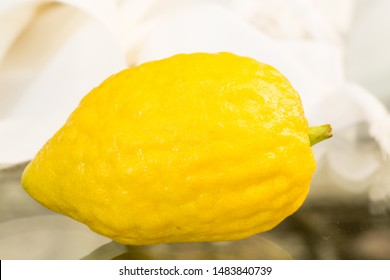 Jewish holiday of sukkot festival . Etrog (Lemon or Citron) Traditional symbol (One of The four species),  arba'at ha-minim - Image