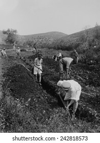 Jewish immigrants digging a trench as they establish a communal agricultural settlement, a kibbutz, on land provided by Jewish philanthropic organizations. Ca. 1920-36.