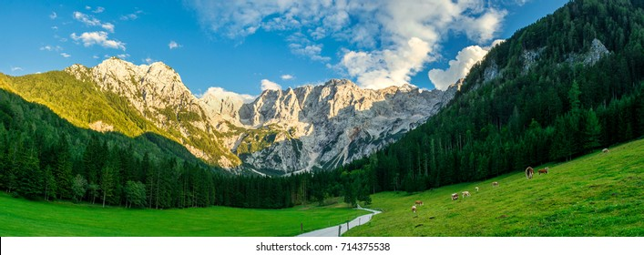 Jezersko, Slovenia, mountains and meadows with cows, panorama