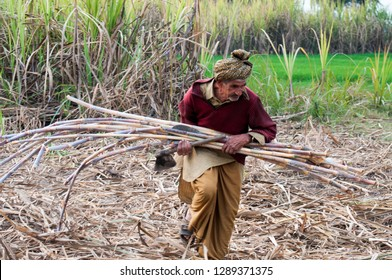Jhang, Punjab Pakistan dated January 19, 2019 An old man is carrying sugarcane for crushing to make Jaggery