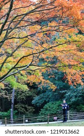 """JIANGXI CHINA-Nov2, 2018: Lushan Mountain, known as """"autumn is drunk"""". In late autumn, golden Ancient Ginkgo biloba and red maple become net red, attracting many tourists to enjoy autumn """"punch in""""."""