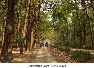 JIM CORBETT, INDIA-May 11: Tourists on a Safari jeeps waiting for the sighting of tiger in the dense forest of sal in Dhikala zone on May 11, 2018, Jim Corbett, Uttrakhand, India