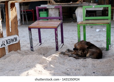 Jimbaran Beach, June 16,2019 : A dog sleeping under the table with reverse HEAVEN words on the beach