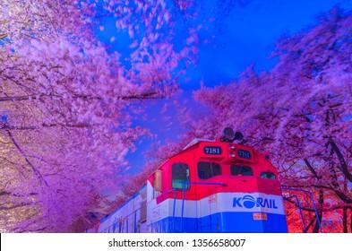 JINHAE, KOREA - MARCH 31, 2019: Beautiful cherry blossom festival at Gyeonghwa station at Night.Jinhae,South Korea.