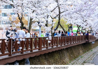 Jinhae, South Korea - Apr 1, 2018 : Jinhae Gunhangje Festival Cherry Blossom Festival in South Korea, Cherry blossom at Yeojwacheon Stream, Jinhae Sakura festival, Jinhae