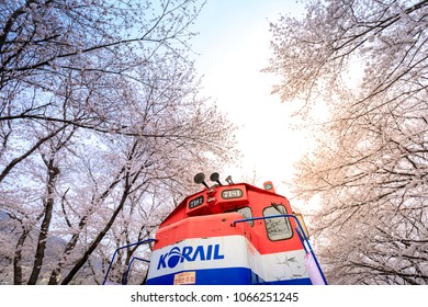 Jinhae, South Korea - Apr 1, 2018 : Jinhae Gunhangje Festival is the largest cherry blossom festival in Korea. Tourists taking photos of the beautiful scenery at the Gyeonghwa Station