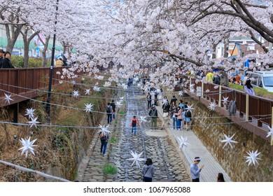 Jinhae, South Korea - Apr 1, 2018 : Spring Cherry blossom festival at Yeojwacheon Stream in Jinhae