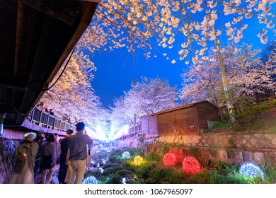 Jinhae, South Korea - Apr 1, 2018 : Spring Cherry blossom festival at Yeojwacheon Stream at night in Jinhae