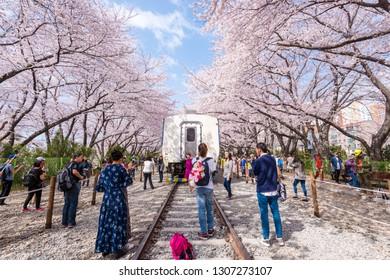 Jinhae, South Korea - Apr, 2018: View of Jinhae Gunhangje Festival at Gyeonghwa station, South Korea's biggest spring festival.