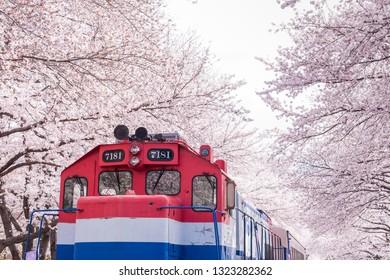 Jinhae, South Korea - Apr, 2018: The Train between cherry blossom tree line in Jinhae Gunhangje Festival at Gyeonghwa station, South Korea.