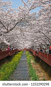 Jinhae, South Korea - April 8, 2011: Crowds of people flock to see the gorgeous cherry blossoms that line the canals of Jinhae, South Korea. Cherry blossom festivals attract visitors from near and far