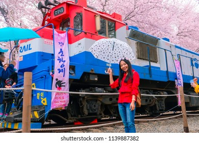 Jinhae, South Korea - March 2018 : Beautiful asian women witth cherry blossom during spring season at Jinhae Cherry Blossom Festival, March 2018 of South Korea.