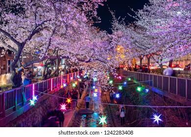 JINHAE, SOUTH KOREA - MARCH 31, 2018:Tourists taking photos of Spring Cherry blossom at Yeojwacheon Stream, Jinhae, South Korea.