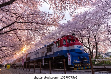 JINHAE,KOREA - APRIL 1 : Jinhae at Gyeonghwa station is the largest cherry blossom festival in Korea.Tourists taking photos of the beautiful scenery around Jinhae,Korea on April 1,2019