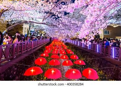 JINHAE,KOREA - APRIL 2 : Jinhae Gunhangje Festival is the largest cherry blossom festival in Korea.Tourists taking photos of the beautiful scenery around Jinhae,Korea on April 2,2016.