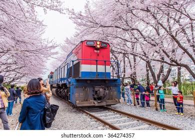 JINHAE,KOREA - APRIL 4 : Jinhae Gunhangje Festival is the largest cherry blossom festival in Korea.Tourists taking photos of the beautiful scenery around Jinhae,Korea on April 4,2015.