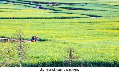 Jinjifengfeng Scenic Area, Luoping County, Yunnan Province in Spring
